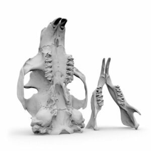 Part2Print - 3D skenování